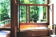大面积景观落地窗,48万米原生林地与水系尽收眼底!