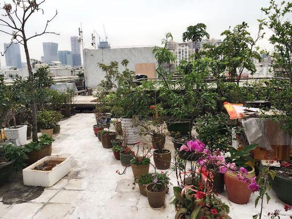 桂园小区 南北通81平米三房送81平顶楼花园 带学位