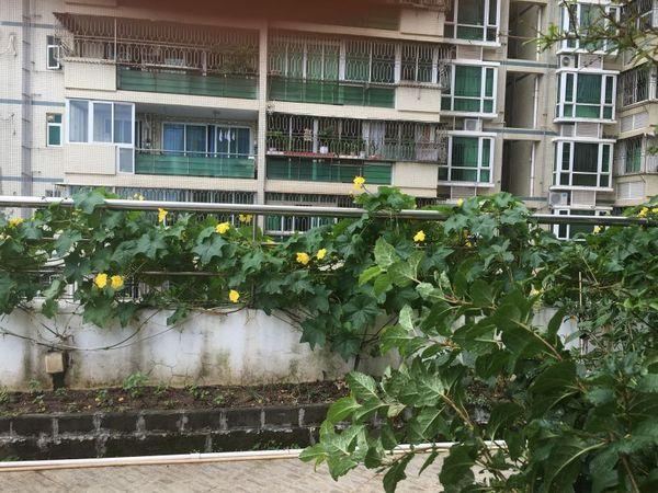 深圳湾带花园的房子!金色海琴苑 精装两房,满两年,地铁房